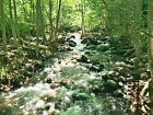 Southern Oregon Unpatented Placer Gold Mining Claim 20 acres on Sturgis Creek.