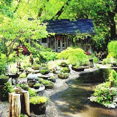 Secret garden - If I remember this correct from the mag article.  This was like a driveway before and they brought in pea gravel and shaped it into this 'yard'.  Seated on the gravel are pots of succulents, bonsai, potted maples..  simply needing a broom to keep the path shaped.