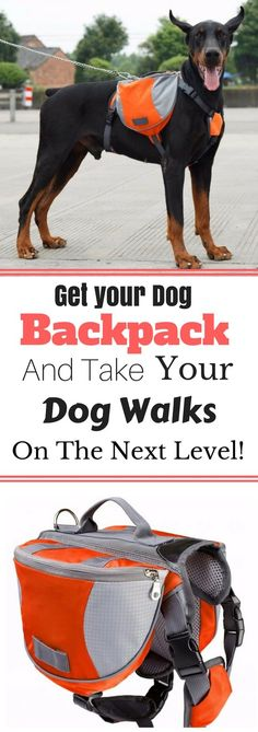 Dogs love having jobs, and if they're focused on walking and carrying, they are much less likely to chase squirrels or bicyclists. There's nothing more therapeutic for a dog than having a job to do, and carrying a backpack is that job.Get your Dog Backpack today to fulfill your dog's need to work and take your dog walks to the next level!