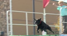 Super Retriever Series Crown Championship brings high-flying dogs to Huntsville