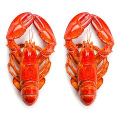 Live Lobster Large 2 Pack, $58, now featured on Fab.