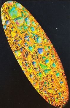An amazing piece of opalized wood...now in someone's collection in Germany... Bill Kasso