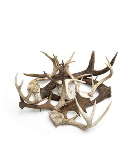 Antlers. Want to incorporate antlers within holiday decorations this year.