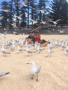 In Sydney making friends.