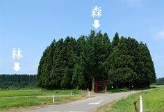 http://www.shinrin-ringyou.com/topics/img/mori-hayashi/02.jpg