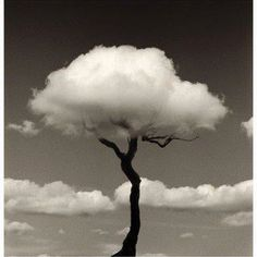 Arbol de nubes
