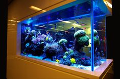 Incredible Aquarium Designs That You Can Try To Make Your Home Look Alive 14 Aquarium Design, Wall Aquarium, Big Aquarium, Home Aquarium, Nature Aquarium, Aquarium Lighting, Marine Aquarium, Aquarium Fish Tank, Planted Aquarium