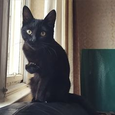 They are natural models in the right lighting. | 28 Reasons To Love Black Cats
