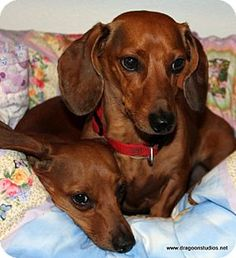 Our Names Are Annabell & Winston, need a loving home. We come as a pair as we are inseparable.