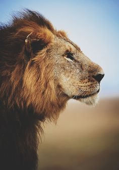 Since I'm a Leo, does that make me King of the jungle?