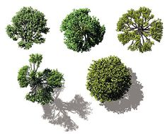 DOSCH DESIGN - DOSCH 2D Viz-Images: Bird's Eye - Trees