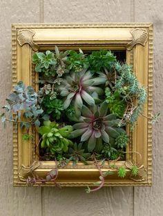 Gold Frame Succulents