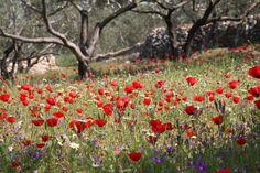 Palestine in spring!