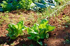 """Mañana martes es día de recolecta en nuestra finca agroecológica de confianza, """"la inmaculada"""", fruta y verdura recién recolectada y enviada a tu casa en 24 horas. http://www.natuorigen.com/esp/fruta-y-verdura-ecol%C3%B3gica/comprar-cestas-fruta-y-verdura-ecol%C3%B3gica/"""