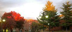 Stephens College sunset