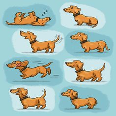 Penny the Dachshund. Dachshund Drawing, Dachshund Art, Wire Haired Dachshund, Dachshund Puppies, Cartoon Dog, Cartoon Drawings, Weenie Dogs, Dog Art, Dog Lovers