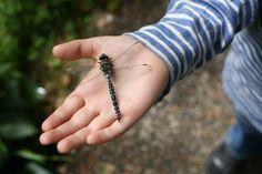 dragonfly (