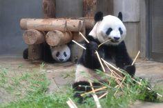 今日のパンダ(2215日目) | 毎日パンダ