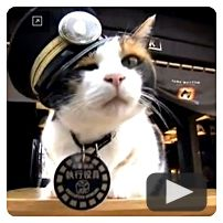 Tama: Station Master Extraordinaire  l World's first feline Train Stationmaster saves Japanese village from unemployment. Gotta love this!