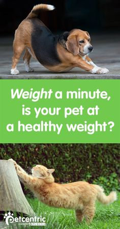 A dog or cat's body weight is a major factor in overall health, especially for life expectancy and ability to be active. You can tell if your pet is over or underweight by checking the overhead and profile views to see if the abdomen is tucked under the rib cage and whether there is a noticeable waist. Although bodies differ from breed to breed, you should be able to feel your pet's ribs.