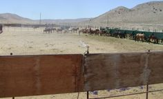 Sprinklers+installed+to+mitigate+effects+of+heat+wave+at+Palomino+Valley+Wild+Horse+and+Burro+Center