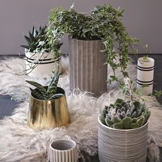 gold plant pot.jpg