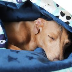 Big SUMMER Sale! Sleeping bags 20% Off Italian Greyhound Dog, Fluffy Dogs, Grey Hound Dog, Sleeping Bags, Cotton Bag, Summer Sale, Make Me Smile, How To Find Out, Gift Ideas