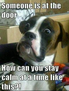 someone at the door!