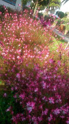 Όμορφα λουλούδια!