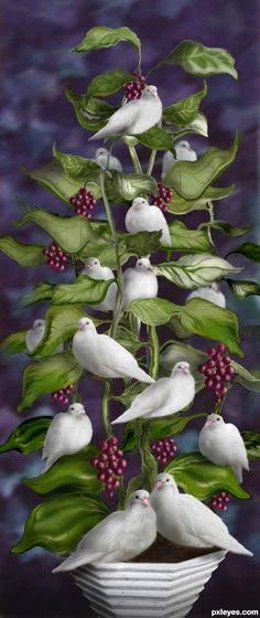 Lovey, Dovey Tree picture, by for: bird house 2 photoshop contest Beautiful Birds, Beautiful Pictures, Photoshop Pics, White Doves, Colorful Birds, Bird Art, Bird Feathers, Belle Photo, Decoupage