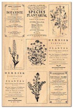 tampon - Herbier  FLORILEGES DESIGN