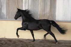 Black beauty Taranto VG