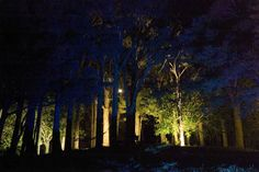 Landscape Lighting design_Insight Light_NZ #13 Totata.jpg