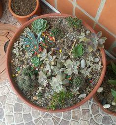 Diseño de jardín. Desierto con cactus y suculentas.
