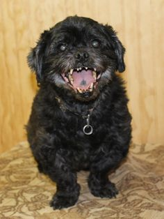 Sam is an outgoing AKC Shih Tzu. He was born on July 16, 2005. Sam is great with other dogs and most cats. He walks well on a leash and loves to play in water. If possible it would be great if he were adopted with his sister Missy. Sam is neutered, heartworm negative and current on all shots. Adoption fee is $75. Visit Tails of Rescue Adoption Center, 981 Lake Blvd., Redding. Call 448-7444. For more pets: www.redding.com