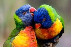 pictures of parrots - Google Search