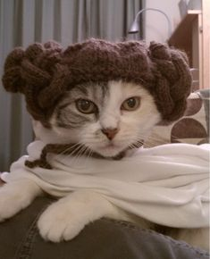 PetsLady's Pick: The May The Fourth Be With You Star Wars Animal Of The Day  ... see more at PetsLady.com ... The FUN site for Animal Lovers