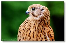 Riegersburg Owl, Animals, Pictures, Animales, Animaux, Owls, Animal, Animais