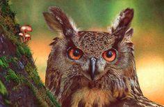 Los hiperrealistas dibujos animales hechos con bolígrafo de Samuel Silva | duendevisual