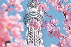 @photoniko56 • Instagram photos and videos Tokyo Skytree, Bird Feeders, Photo And Video, Videos, Outdoor Decor, Photos, Instagram, Home Decor, Pictures