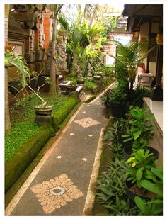 Bali garden     love the path