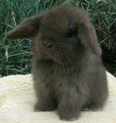 I love this baby bunny! I have a bunny her name is LOLA she is soooooooooooooo cute