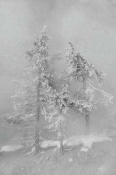 Winter and Snow/karen cox.The snow storm. Winter Szenen, I Love Winter, Winter Magic, Winter White, Winter Trees, Snowy Trees, Snow White, I Love Snow, Snow Scenes