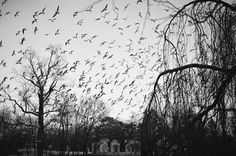 fotografie K. Kawskiego