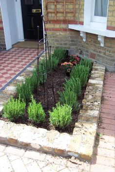 Rosemary hedge and obelix  #PlewsGD #PlewsGardenDesign