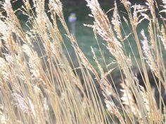 Wheat Gluten Allergies