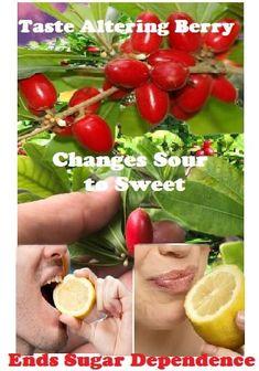 Miracle Berries Taste Altering Berry