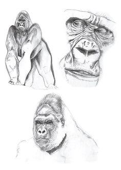 Gorilla Sketches