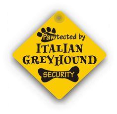 Italian Greyhound Security