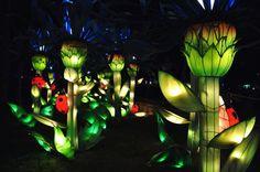 Dubai Garden Glow - Flores, prédios, instalações, bagunca e luzes